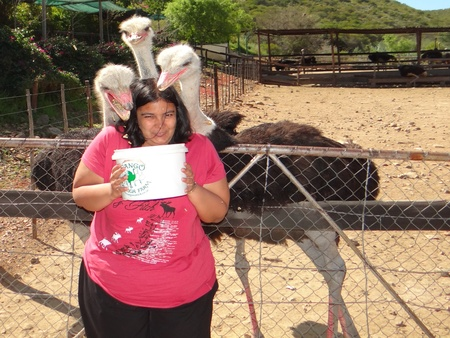Ostrich Farm in Oudtshoorn, South Africa