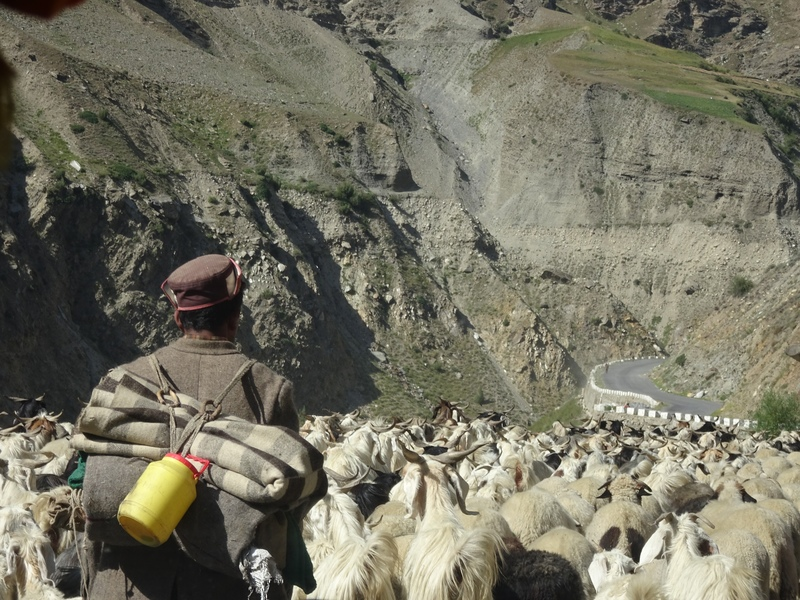 Traffic Jam in Leh Ladakh