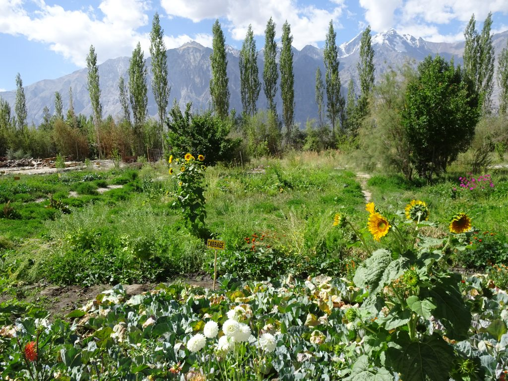 Nubra Eco-Lodge - Gardens