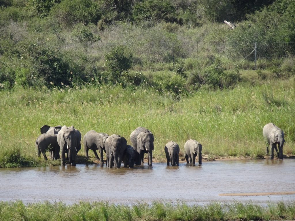 A herd of 10 Elephants at KNP