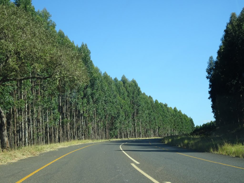 Beautiful road enroute to Graskop