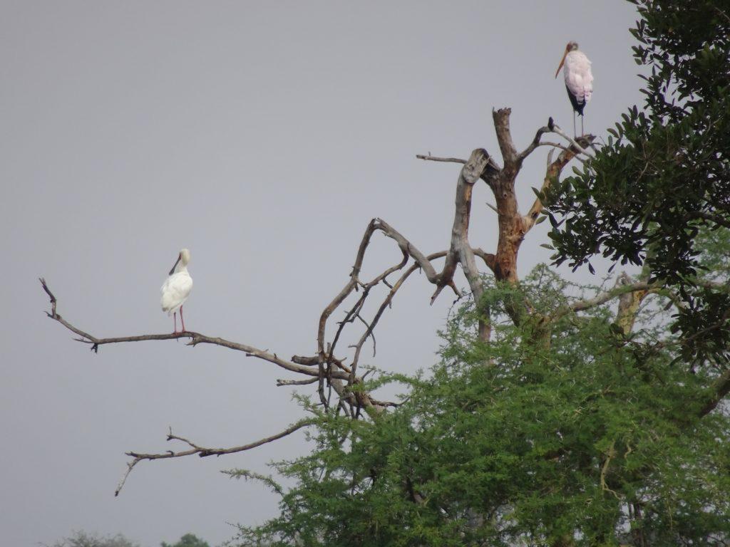 Birds at Satara
