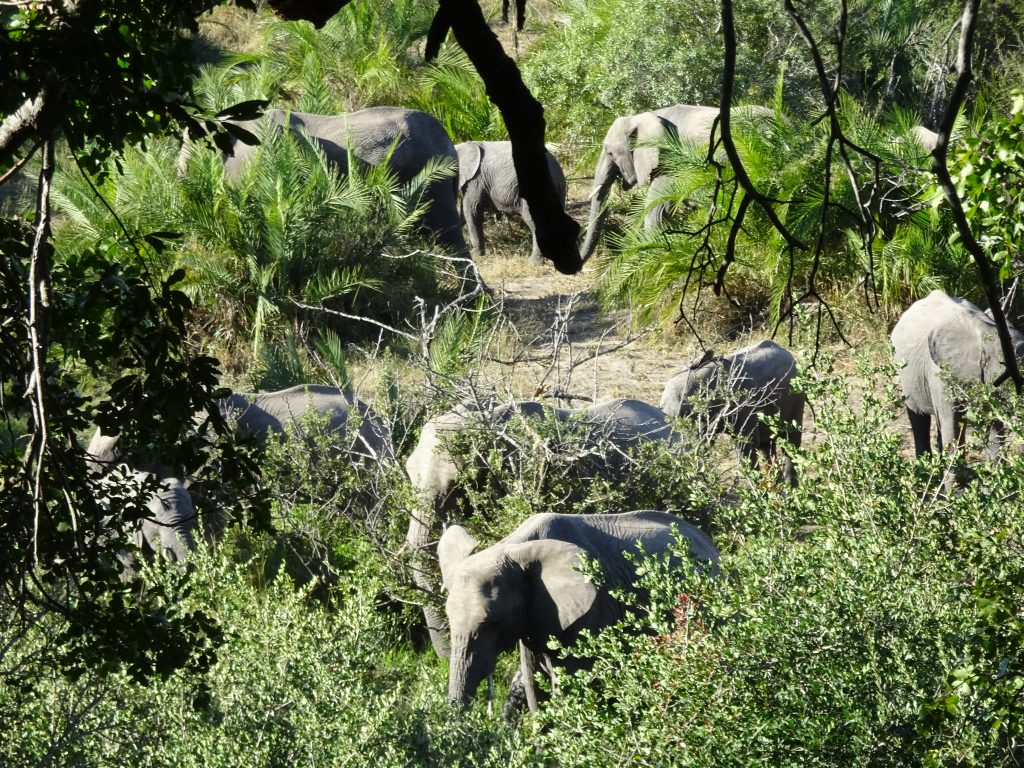 Elephants at EP