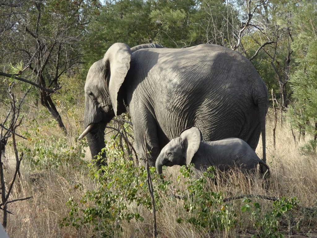 Female Elephant with her baby at EP