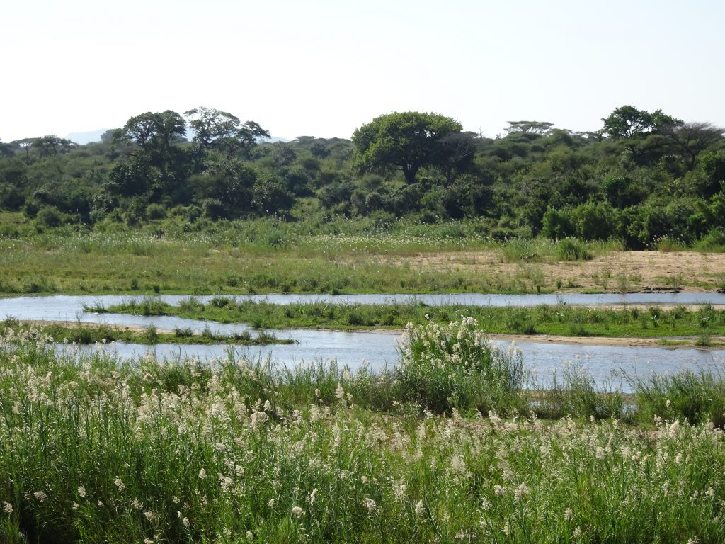 KNP scenery