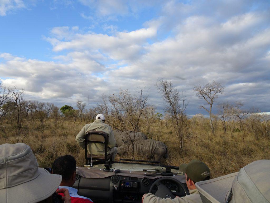 Rhinos at Elephant Plains