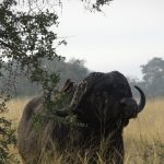 Kruger, South Africa: Detailed Itinerary and Trip Report - Part 1 (Satara Rest Camp)