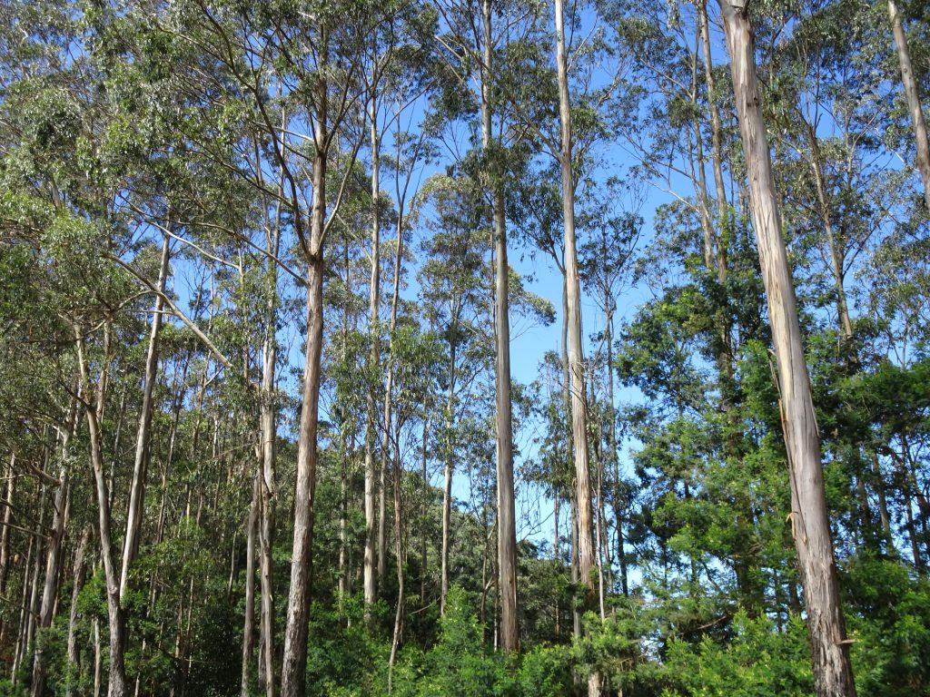 Forest Drive in Kodaikanal