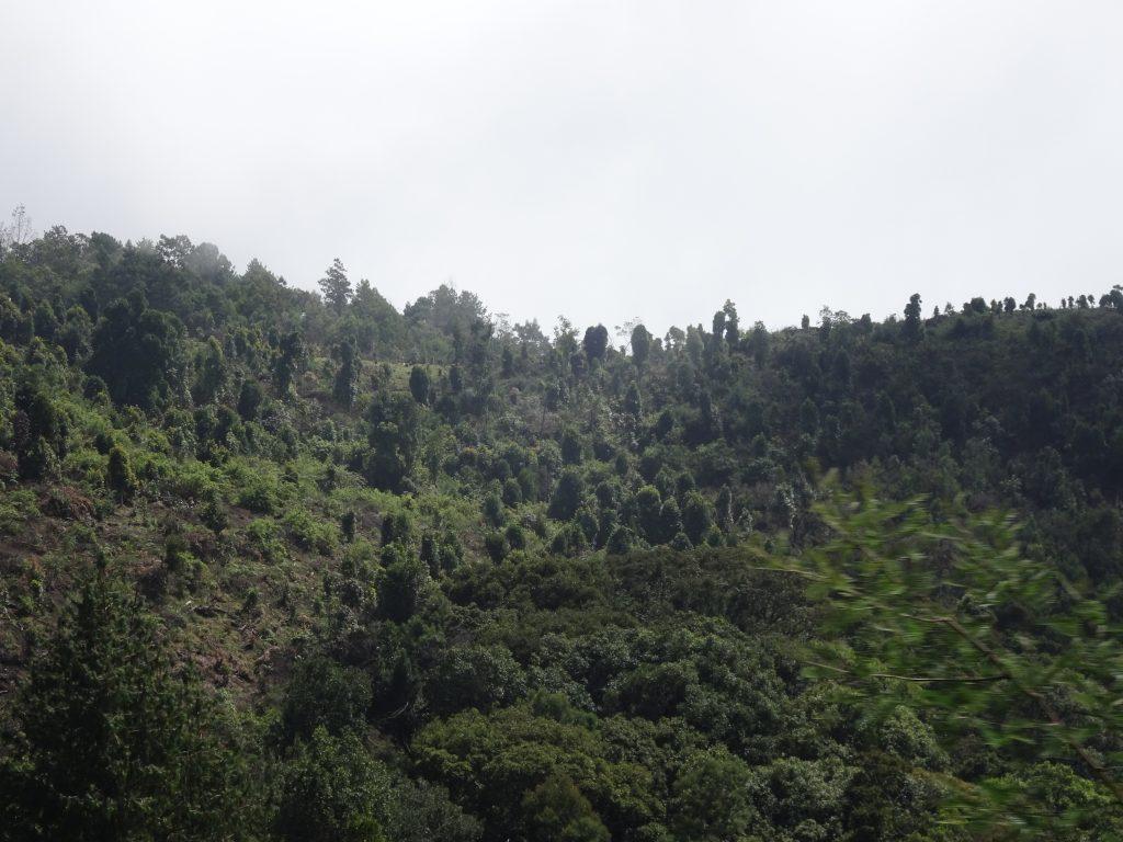 Mathikettan Shola View Point in Kodaikanal