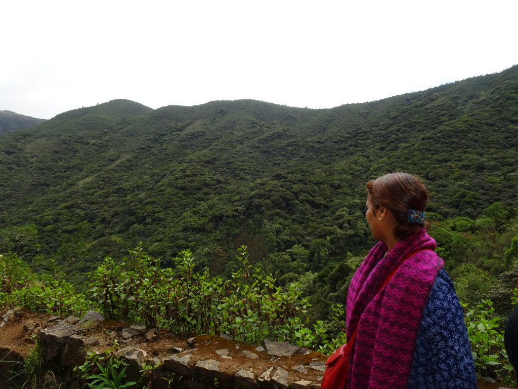 Cauliflower forest in Ooty