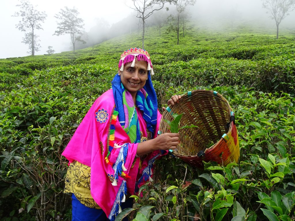 Photo in tea estate, Ooty