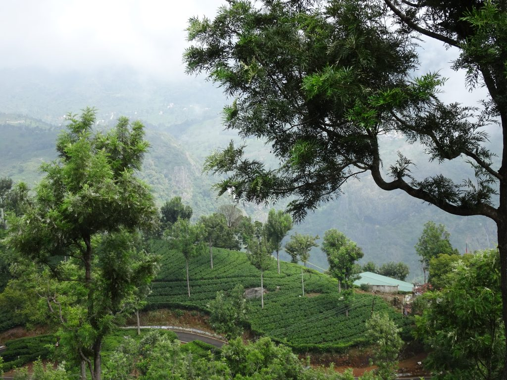 Tea Estates in Coonoor
