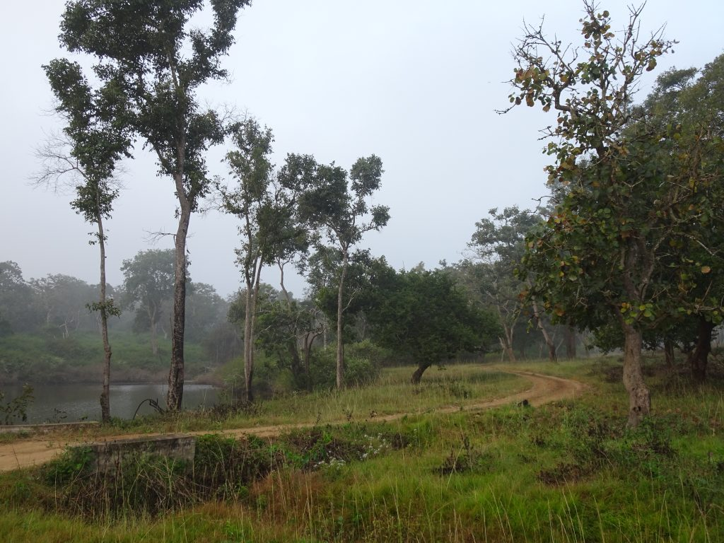 Landscape at Bandipur National Park