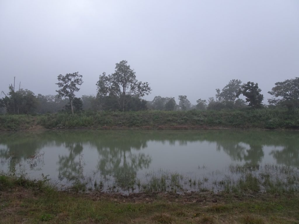 Scenery at Bandipur National Park