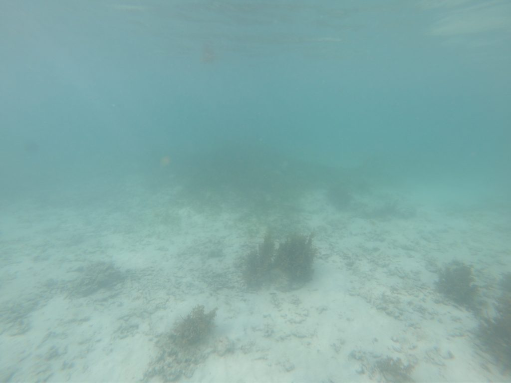 Seychelles visibility in June