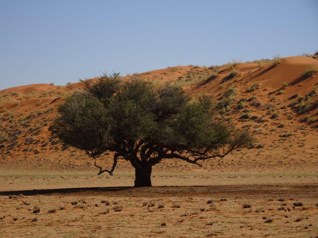Elim dune in Namibia