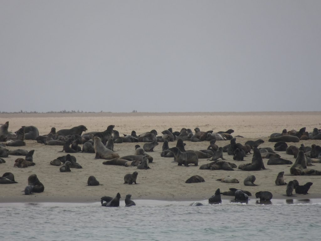 60,000 Seals on Sandwich Harbour Tour