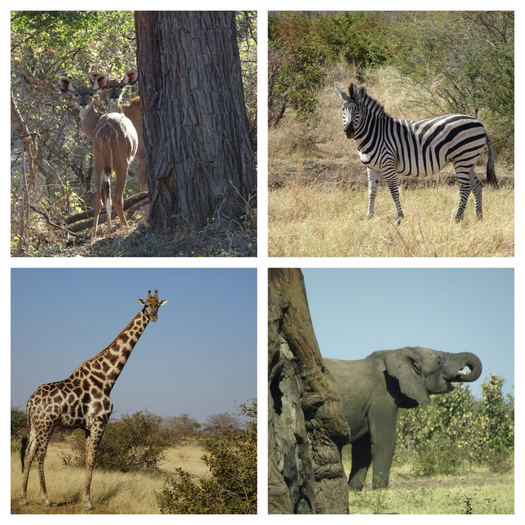 Animals in Mahango