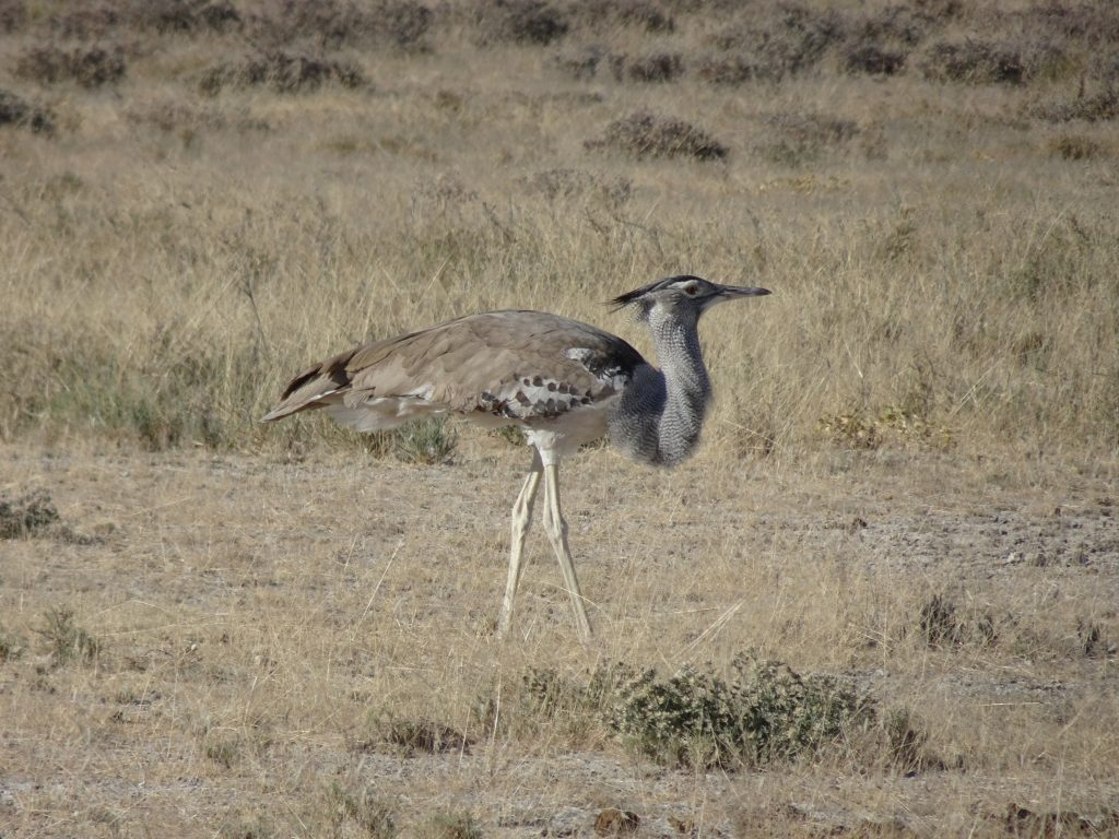 Bird in Etosha National Park