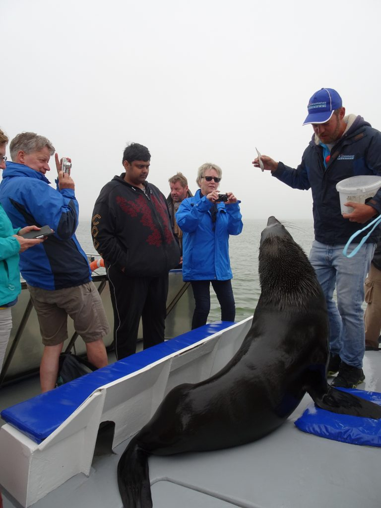 Fedding seals on Sandwich Harbour Tour