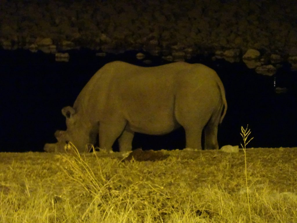 Rhinos at Okaukuejo
